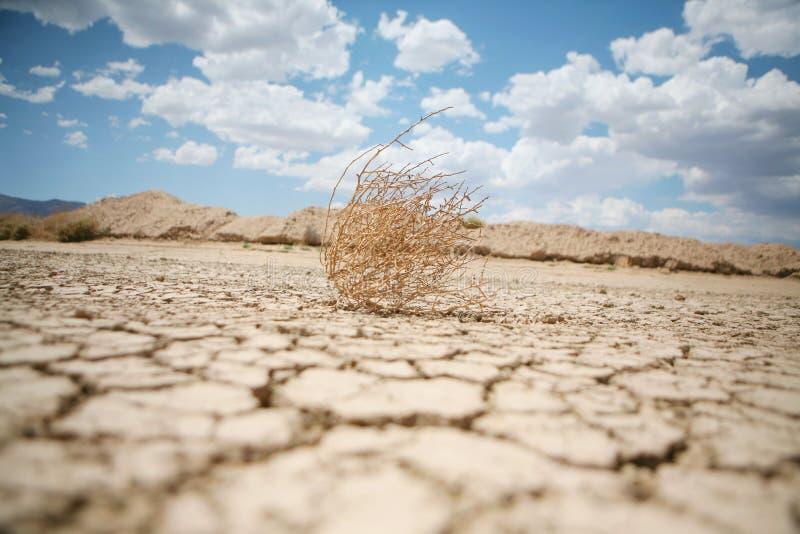 Tumbleweed in the desert stock photo