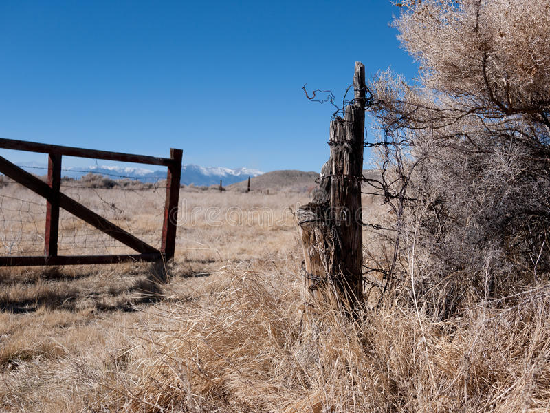 Tumbleweeds tangled up in a barbed wire fence. Tumbleweeds pile up in a barbed wire fence stock photos