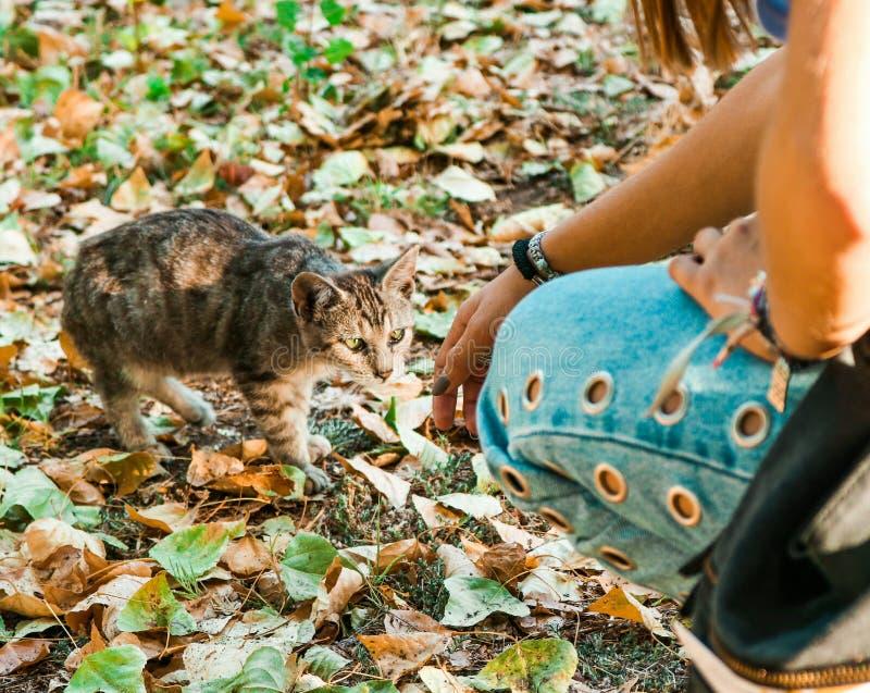 Tumblr flicka med katten arkivbilder