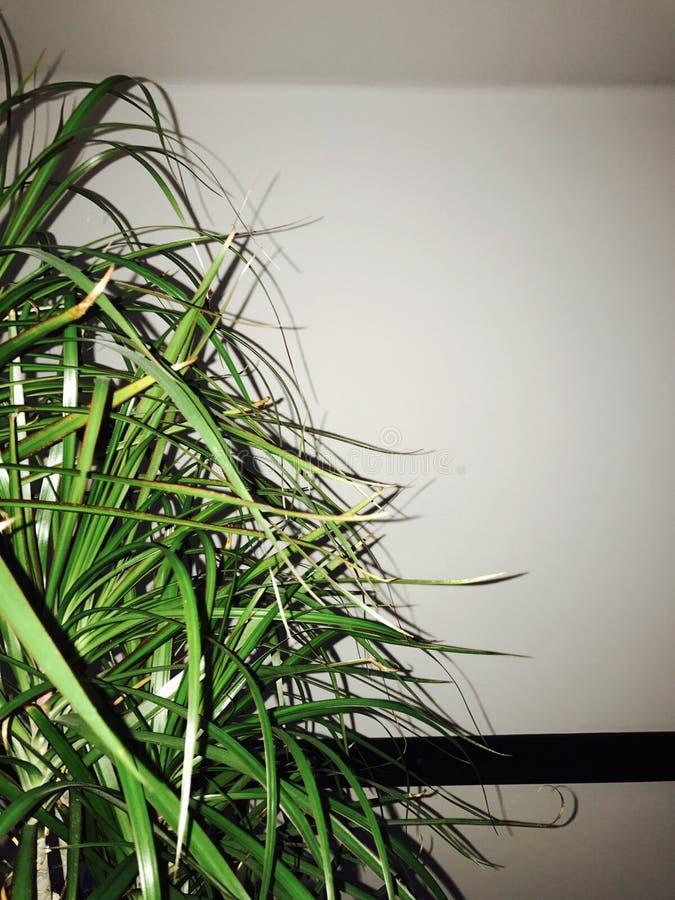 Tumblr modern växt arkivfoto