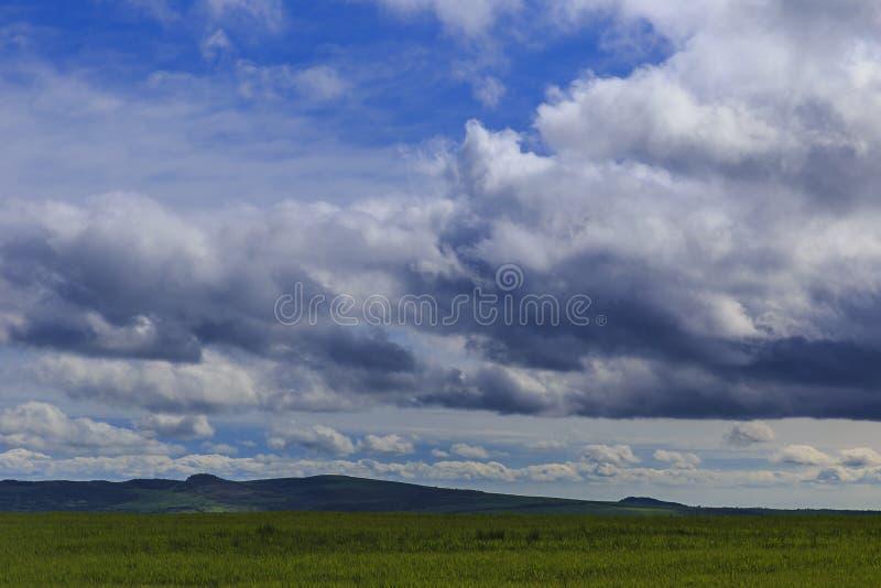 Tumult av nya vårgräs och moln fotografering för bildbyråer