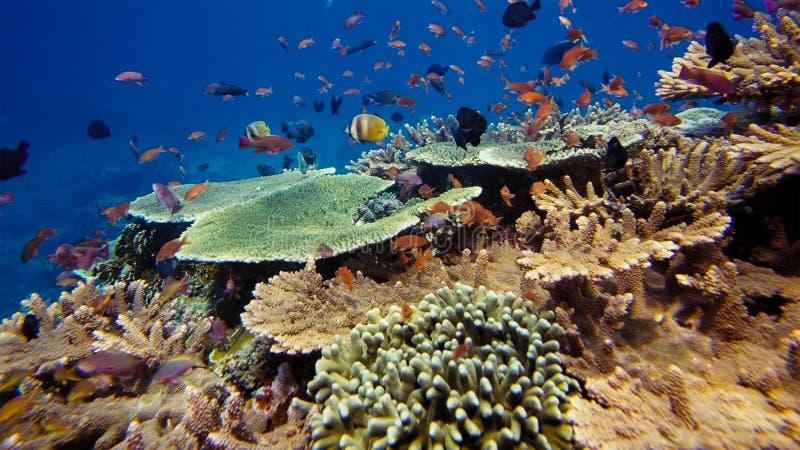 Tumult av undervattens- liv Mångfald av formen, sagolika färger av mjuka koraller och färgrik skola av fiskar Papua Niugini, Indo royaltyfria foton