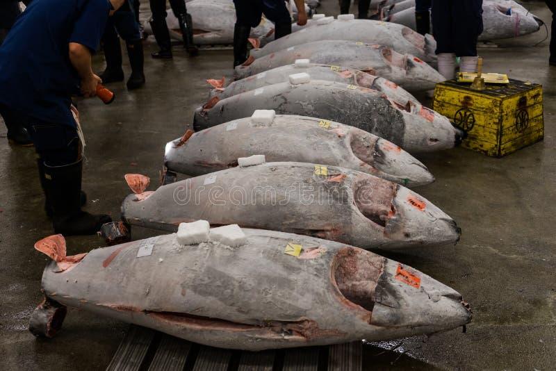Tuna Auction på den Tsukiji fiskmarknaden Tokyo arkivfoto