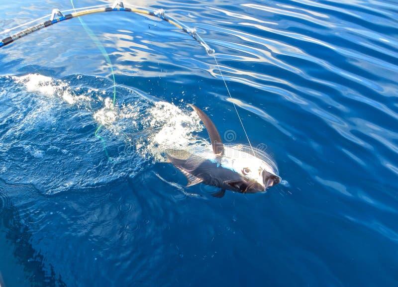 Tuna Catch stock afbeelding