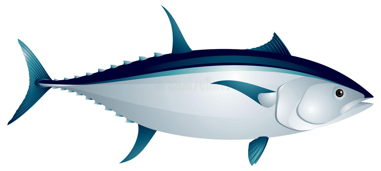 Tuna fish vector illustration