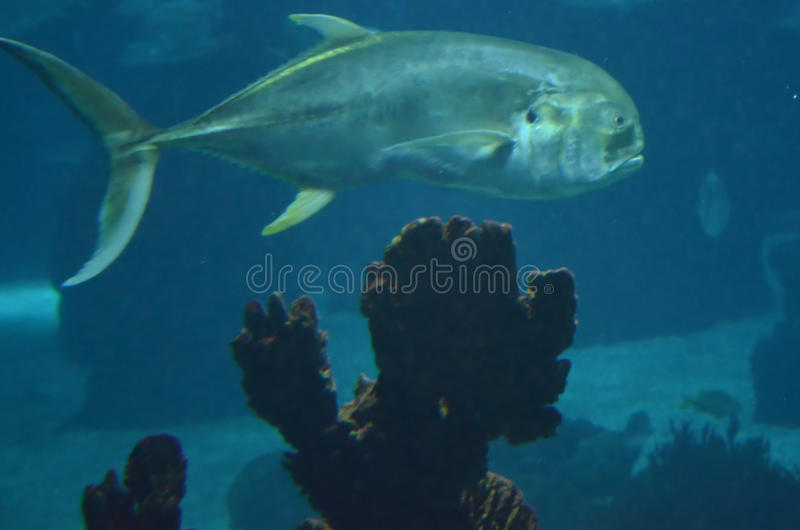 Tuna Fish images stock