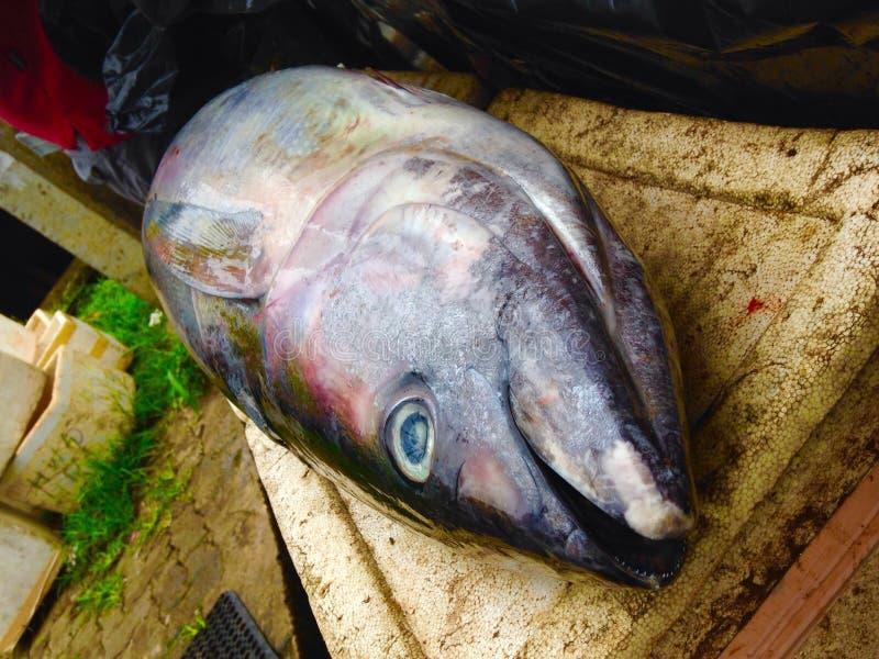 Tuna Fish arkivfoto