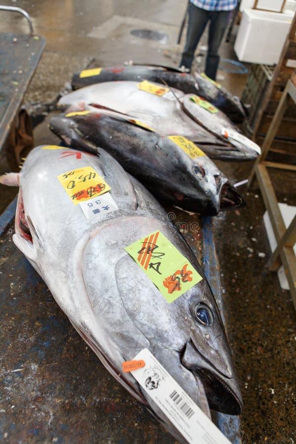Tuna Fish. Fresh tuna fish at Tsukiji fish market in Tokyo, Japan. Photo taken on: April 11th, 2013 stock photography