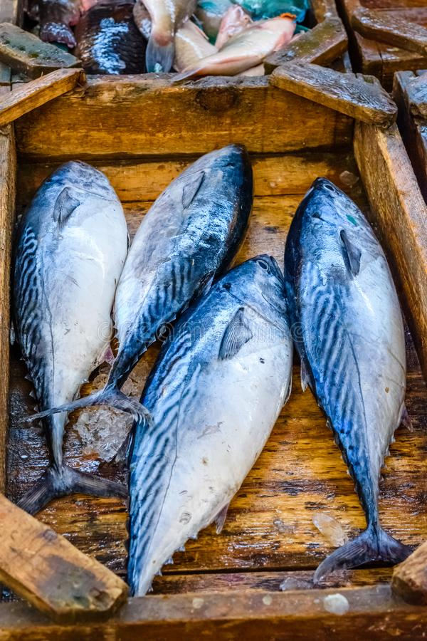 Tuna fish on fish market in a Hurghada city, Egypt royalty free stock images