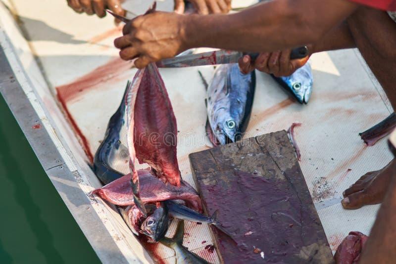 Tuna Maldivian Style di filettamento fotografia stock libera da diritti
