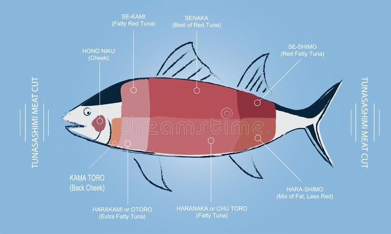 TUNA Sashimi Meat cut guide chart. With meat part name in English and Japanese, Graphic vector editable pencil drawing line style with pastel soft colours stock illustration