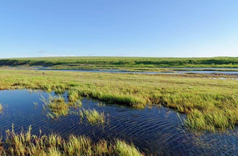 Tundra τοπίο στοκ εικόνα με δικαίωμα ελεύθερης χρήσης