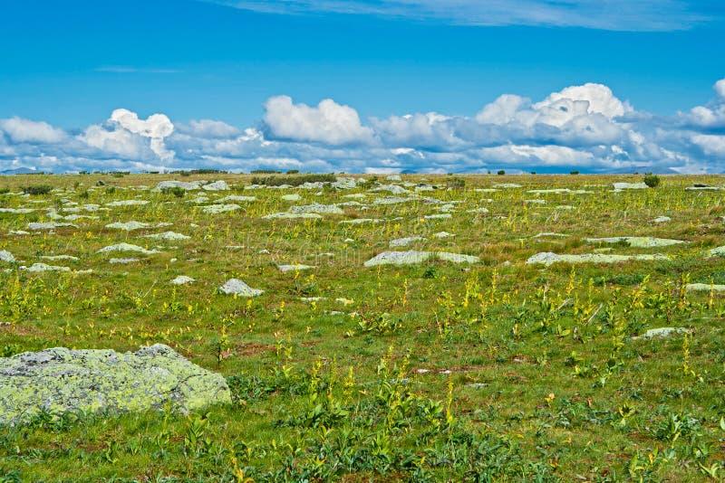 Tundra fotografia de stock royalty free