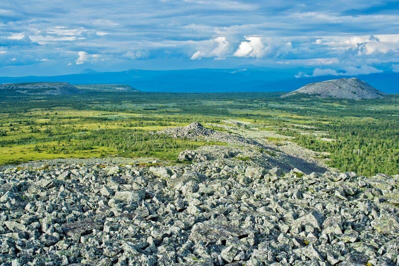 Tundra imagem de stock royalty free