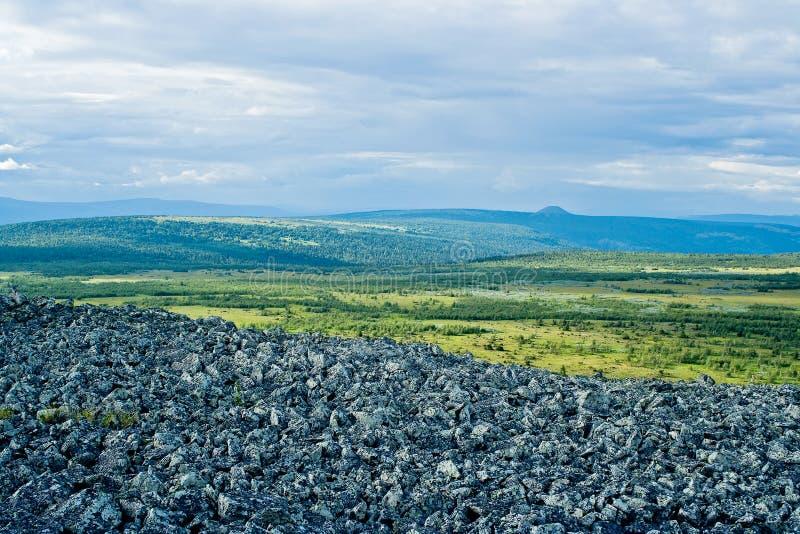 Tundra zdjęcie royalty free