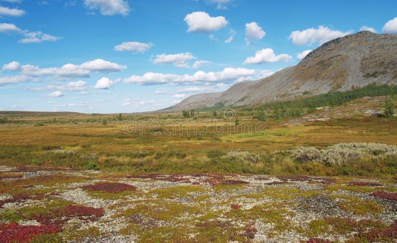 tundra obraz royalty free