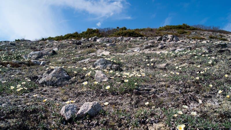 tundra zdjęcie stock