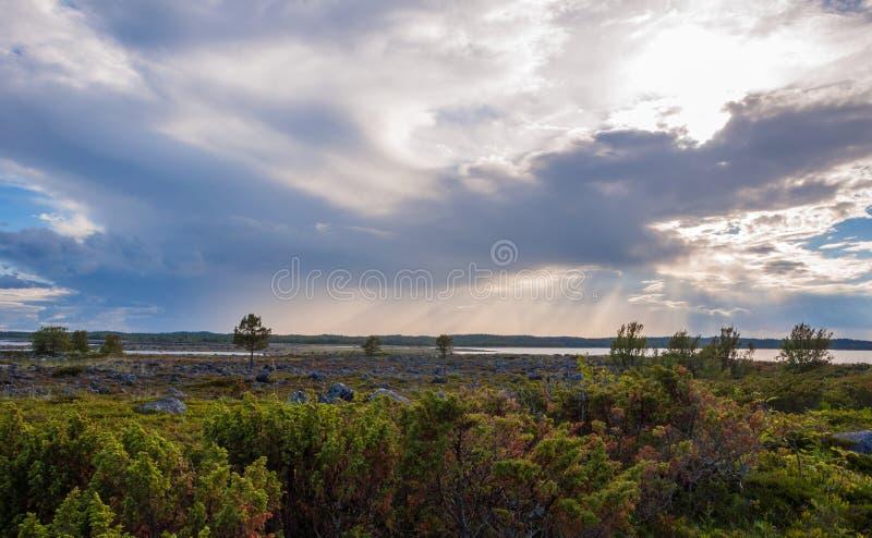 tundra fotografia de stock