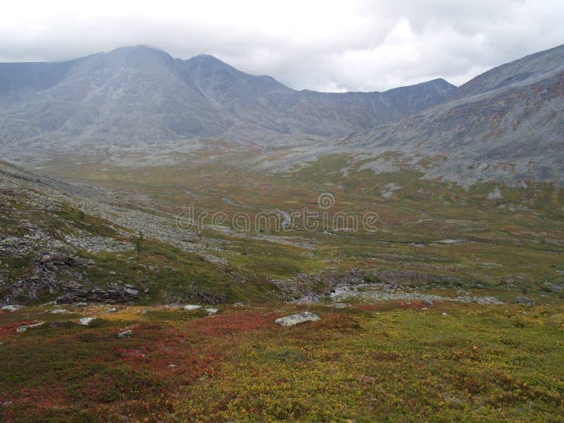 tundra fotografia royalty free