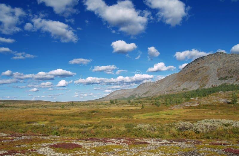 Tundra lizenzfreie stockbilder