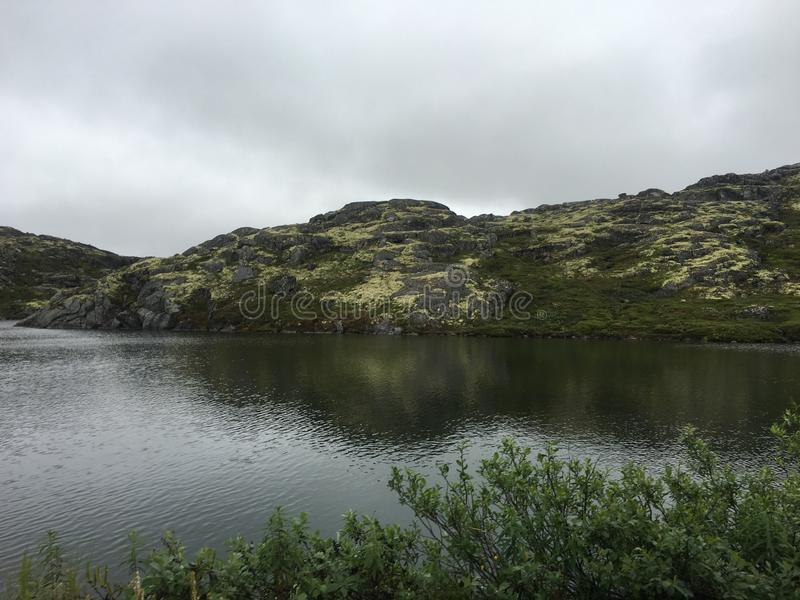 tundra fotografia stock