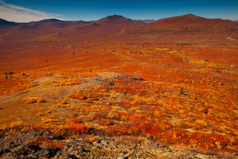 Tundra alpestre fotos de archivo