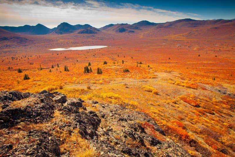 Tundra alpestre foto de archivo libre de regalías