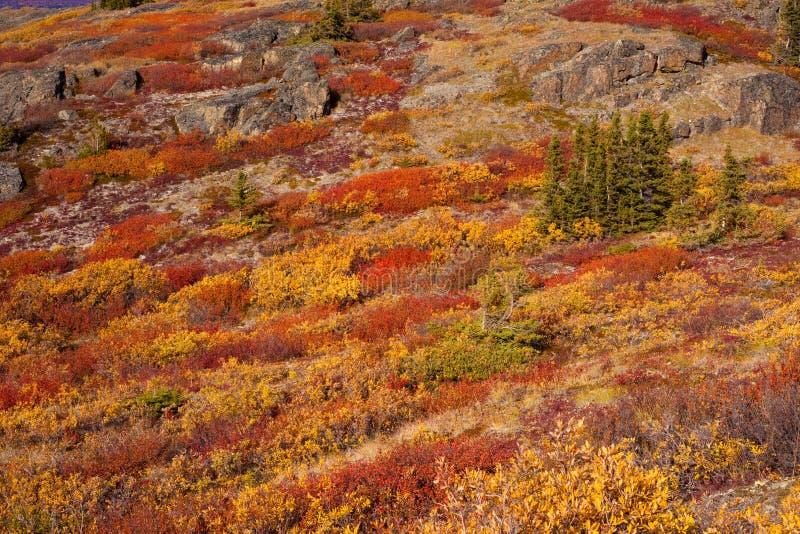 Tundra alpestre fotografía de archivo libre de regalías