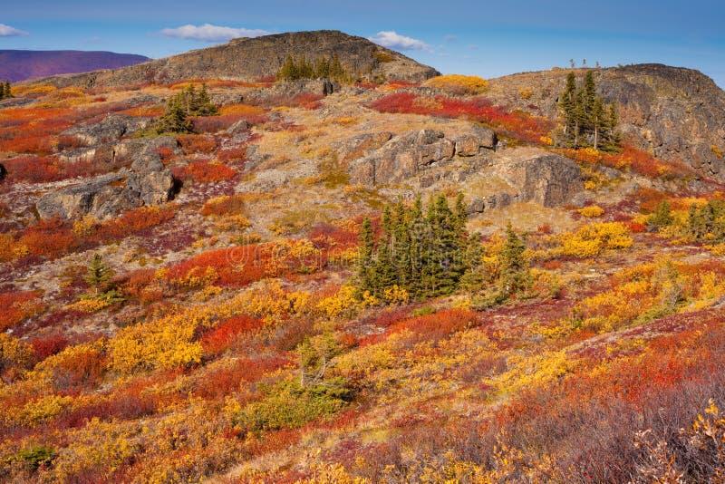 Tundra alpina foto de stock royalty free