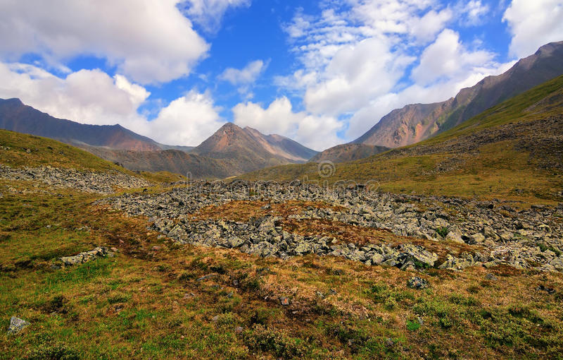 Tundra alpina fotos de stock