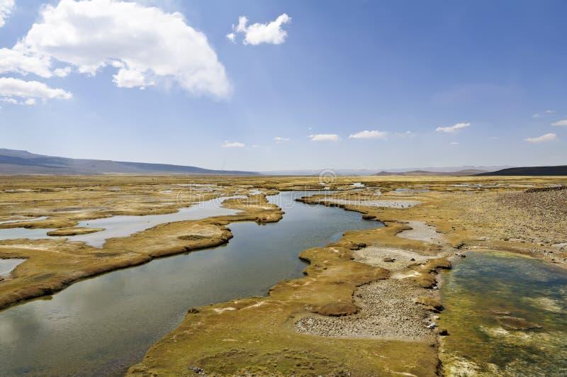 Tundra alpina andina, Perù immagine stock libera da diritti
