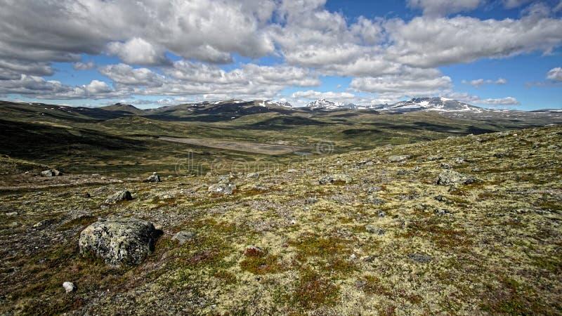 Tundra auf Dovrefjell-Gebirgszug in Norwegen stockfotos