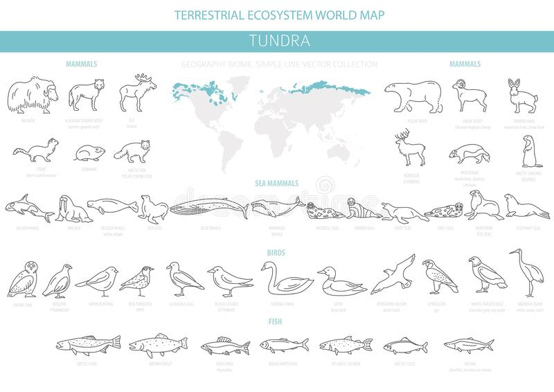 Tundra biome Απλό ύφος γραμμών Επίγειος παγκόσμιος χάρτης οικοσυστήματος Αρκτικό infographic σχέδιο ζώων, πουλιών, ψαριών και φυτ διανυσματική απεικόνιση