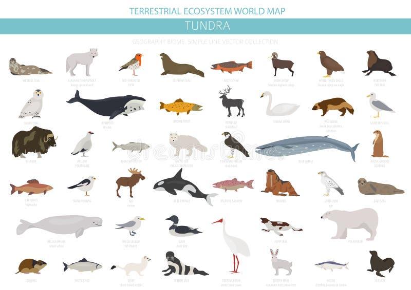 Tundra biome Επίγειος παγκόσμιος χάρτης οικοσυστήματος Αρκτικό infographic σχέδιο ζώων, πουλιών, ψαριών και φυτών απεικόνιση αποθεμάτων