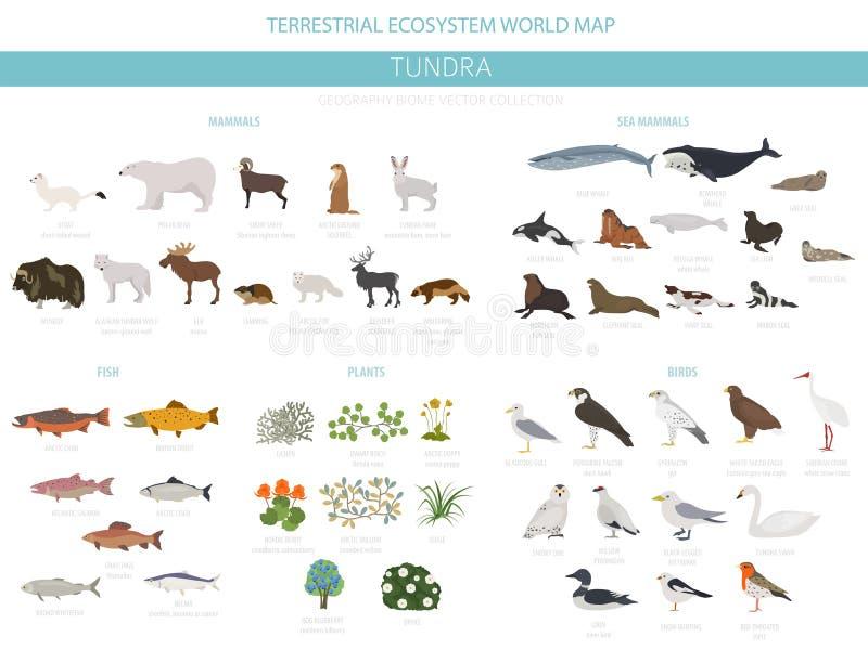 Tundra biome Επίγειος παγκόσμιος χάρτης οικοσυστήματος Αρκτικό infographic σχέδιο ζώων, πουλιών, ψαριών και φυτών διανυσματική απεικόνιση