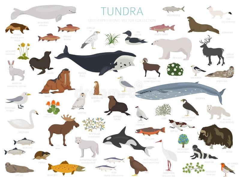 Tundra biome Επίγειος παγκόσμιος χάρτης οικοσυστήματος Αρκτικό infographic σχέδιο ζώων, πουλιών, ψαριών και φυτών ελεύθερη απεικόνιση δικαιώματος