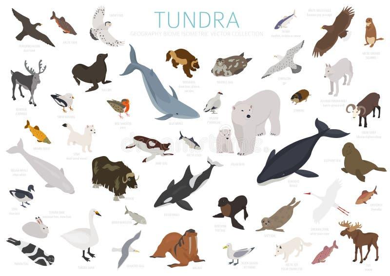 Tundra biome isometric τρισδιάστατο ύφος Επίγειος παγκόσμιος χάρτης οικοσυστήματος Αρκτικό infographic σχέδιο ζώων, πουλιών, ψαρι ελεύθερη απεικόνιση δικαιώματος