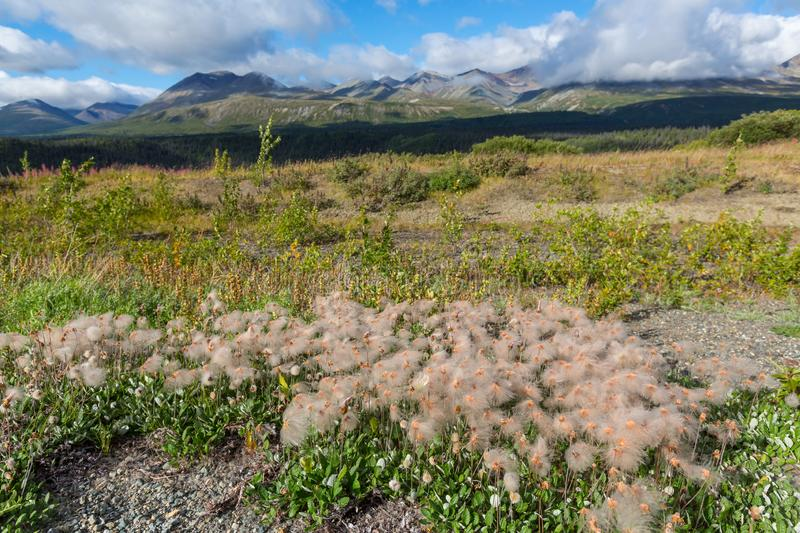 Tundra in Canada. Tundra landscapes above Arctic circle royalty free stock images