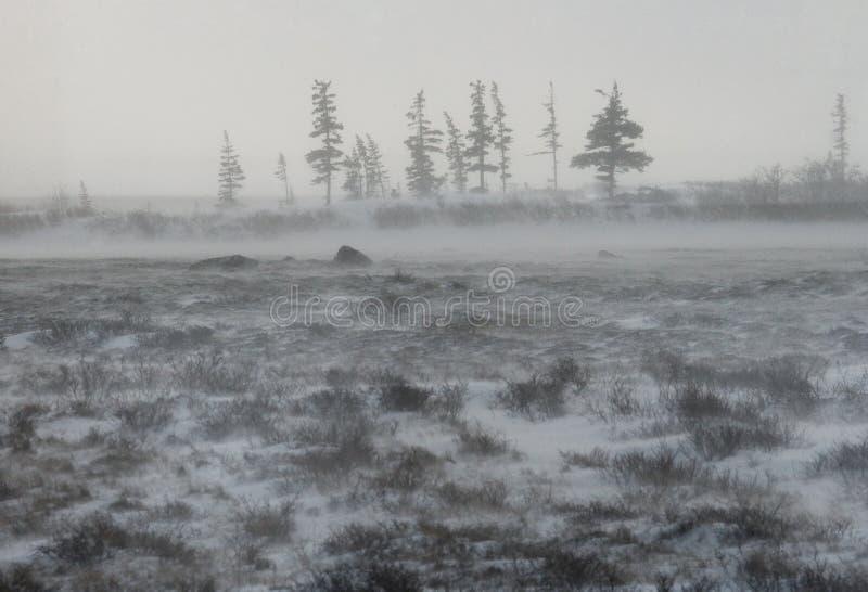 Tundra canadense Parque nacional de Churchill, Canadá Paisagem ártica imagens de stock