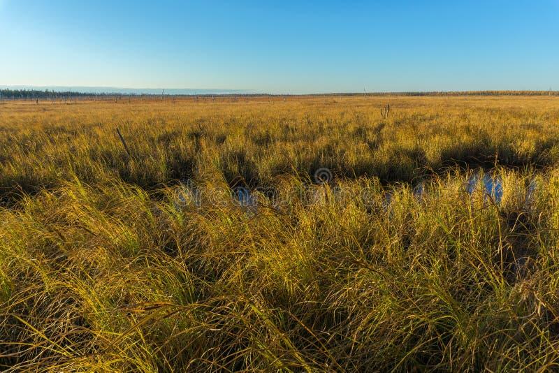 Tundra de Autumn Landscape fotos de stock
