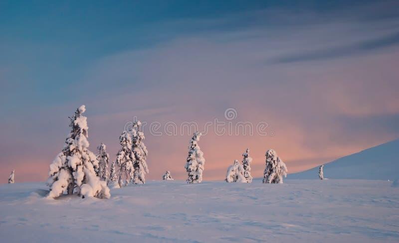 Tundra del invierno en la salida del sol imagen de archivo