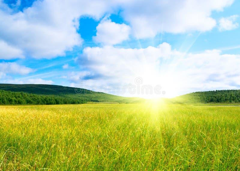 Tundra del nord fotografia stock libera da diritti