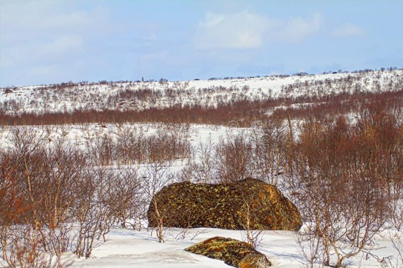 Tundra della montagna della Lapponia in primavera Estensione innevata e betulla scherzose fotografie stock libere da diritti