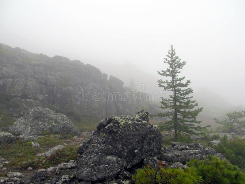 Tundra della montagna in una nebbia fotografia stock libera da diritti