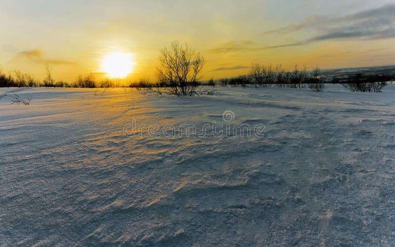 Tundra en invierno imagen de archivo
