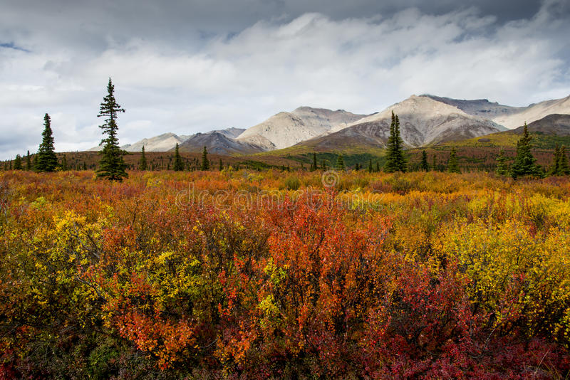 Tundra i den Denali delstatsparken royaltyfria foton