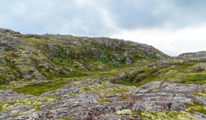 Tundra Kola półwysep w inclement pogodzie, zielony mech zdjęcia royalty free