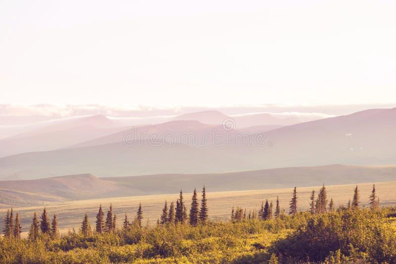Tundra krajobraz obrazy stock
