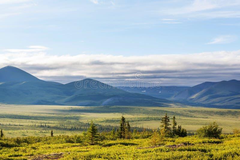 Polar tundra. Tundra landscapes above Arctic circle royalty free stock photos
