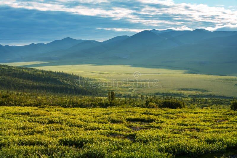 Polar tundra. Tundra landscapes above Arctic circle stock photography